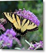 Eastern Tiger Swallowtail Butterfly 2015 Metal Print