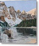 Elk In Moraine Lake Metal Print