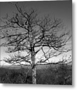 Embrace The Sky Metal Print