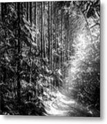 Enchanted Path Metal Print