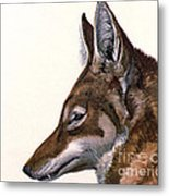 Ethiopian Wolf, Endangered Species Metal Print