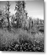 Faces Of The Swamp, No. 7 Metal Print