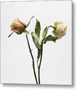 Faded Rose Flower Metal Print