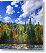 Fall Forest In Sunshine Metal Print