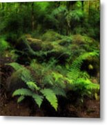 Ferns Of The Forest Metal Print