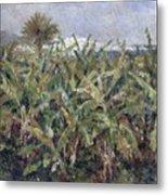 Field Of Banana Trees Metal Print