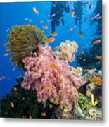 Fiji Underwater Metal Print by Dave Fleetham - Printscapes