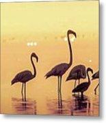 Flamingo During Sunset Metal Print