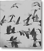 Flight Of The Sandhill Cranes Metal Print