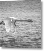 Flight Of The Swan Metal Print