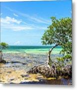 Florida Keys Mangrove Reef Metal Print