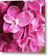 Flowers - Freshly Cut Lilacs Metal Print
