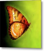 Flying Butterfly On Decorative Background, Graphic Design. Metal Print