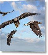 Flying Eagles Metal Print