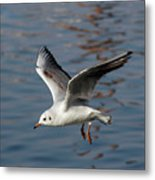 Flying Gull Metal Print