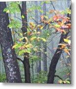 Foggy Fall Forest Metal Print