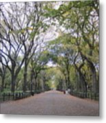 Forest Alley Metal Print