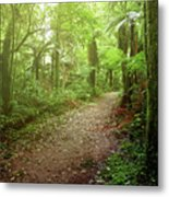 Forest Walking Trail 1 Metal Print