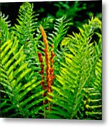 Fern Fractals In Nature Metal Print