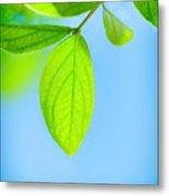 Fresh Green Leaves Metal Print