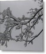 Fresh Snow On Magnolia Tree Metal Print