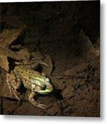 Frog 4 Metal Print