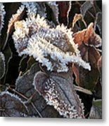 Frost-lined Metal Print
