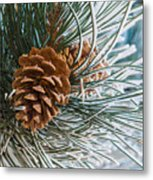 Frosty Pine Needles And Pine Cones Metal Print