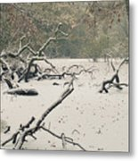 Frozen Fallen Metal Print by Andy Smy
