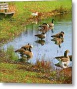 Geese Lake Fall  Metal Print