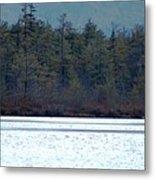 Geese On Labrador Pond Metal Print