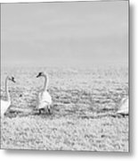 Geese Surrounded By Hoarfrost Metal Print