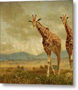 Giraffes In The Meadow Metal Print