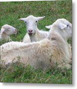 Goat Family Metal Print