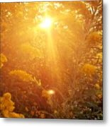 Golden Days Of Autumn Metal Print