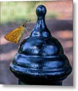 Golden Moth Metal Print