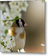 Goldfinch Spring Blossom Metal Print