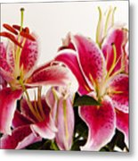 Graceful Lily Series 10 Metal Print