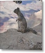 Grand Canyon Squirrel Metal Print