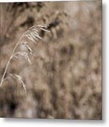 Grass Blade Metal Print