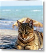 Gray Cat On The Background Of The Sea 1 Metal Print