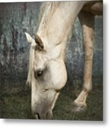 Grazing Metal Print by Betty LaRue