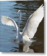 Great Egret Wings Metal Print