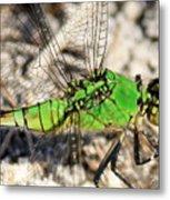 Green Dragonfly Closeup Metal Print