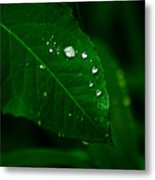 Green Leaf With Raindrops Metal Print