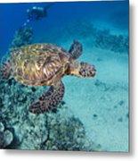 Green Sea Turtles  Metal Print by Dave Fleetham - Printscapes