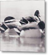 Group Of Ducks Metal Print