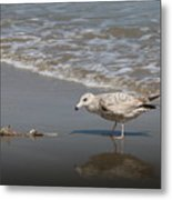 Gull With Fish  Metal Print