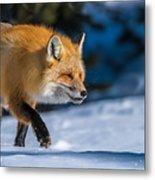 Handsome Mr. Fox Metal Print