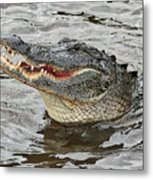 Happy Florida Gator Metal Print